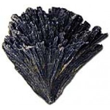 Kyanite Black raw winged crystal
